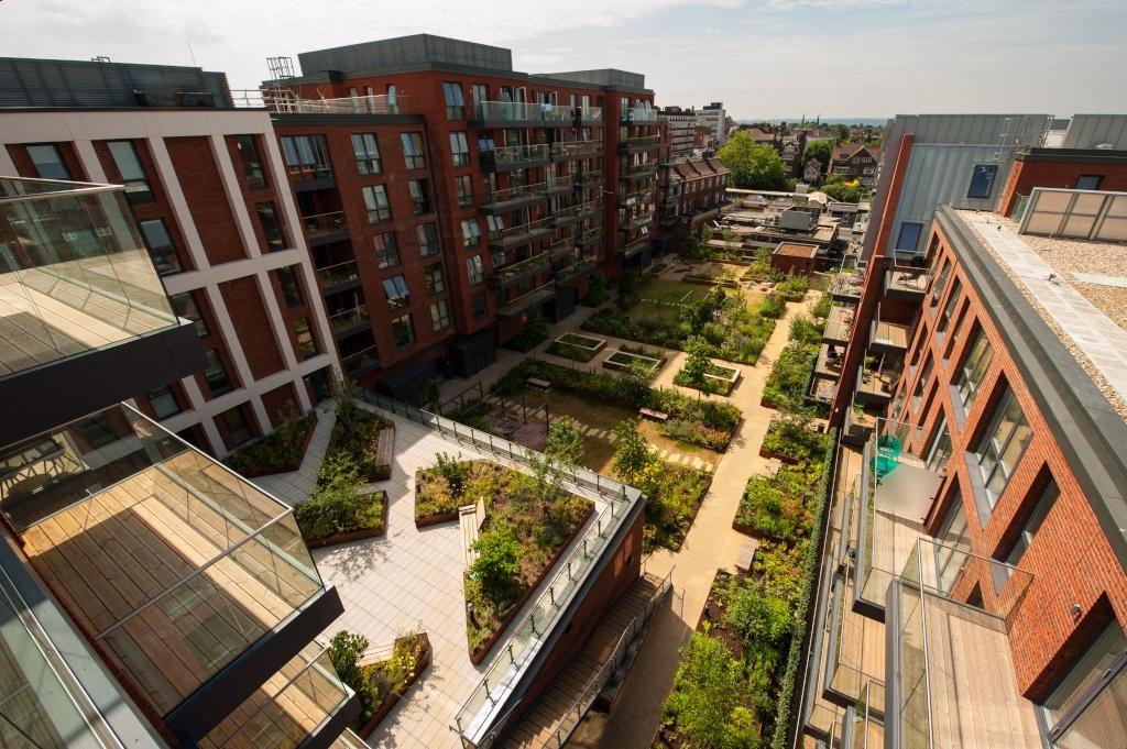 Streatham Hill Roof Garden