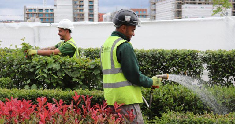 Our Commercial Landscape Services Team