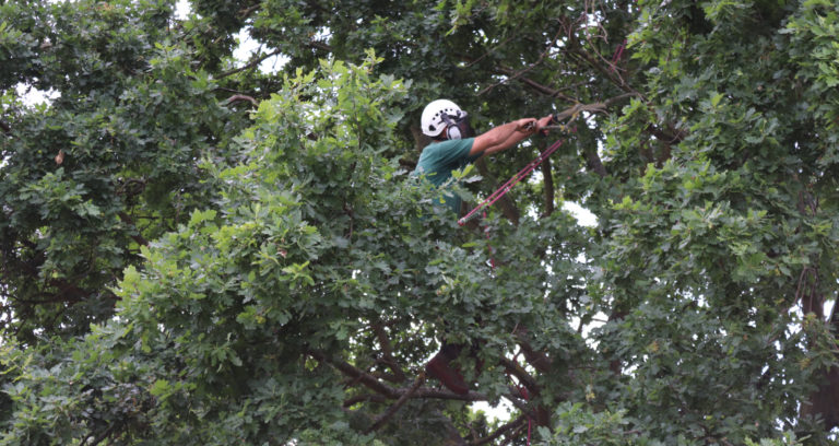 Tree Care from Kingston Landscape Group